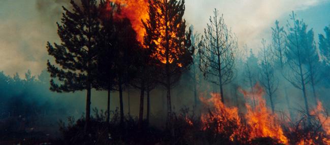 incendi forestal al terme de quatretonda