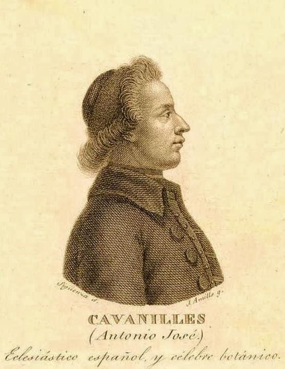CAVANILLES I QUATRETONDA