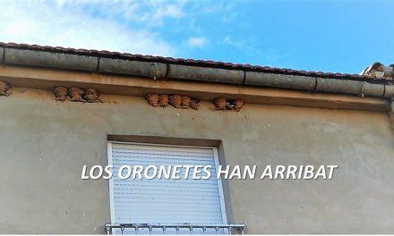 LES ORONETES HAN ARRIBAT