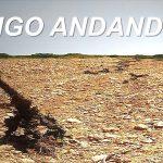 SIGO ANDANDO